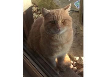 cat found Mont St Gregoire