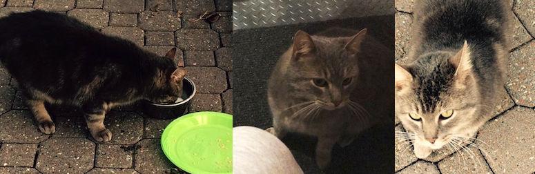 kitten found RDP