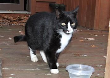 cat found in St Lazare