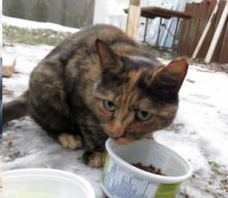cat found St Roch de l'Achigan