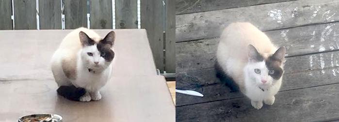cat found Verdun