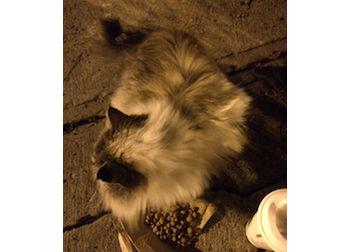 cat found Villeray