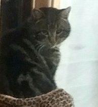 cat lost Val Belair