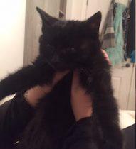kitten found in RDP