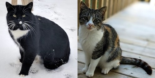 2 cats found in Châteauguay