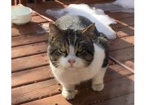 cat found in Lachine