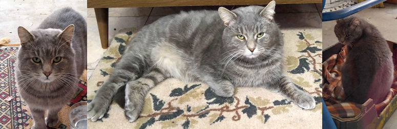 cat found St Leonard