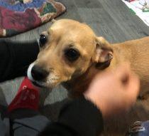 dog found Laval