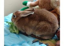 rabbit found in Anjou
