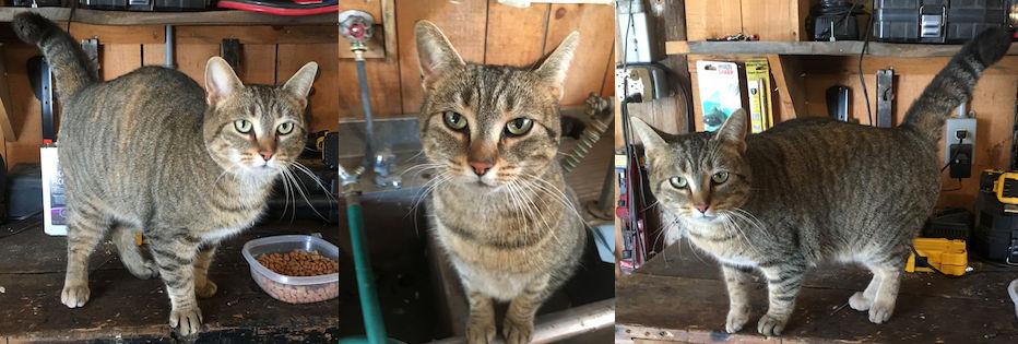 cat found in Brome