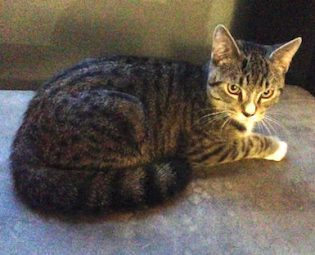 cat found Hochelaga