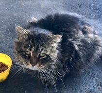 cat found in Marieville