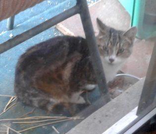cat found PAT
