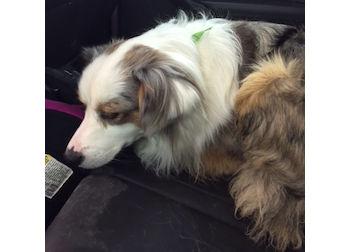 dog found St Jerome