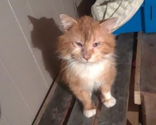 cat found in Brownsburg