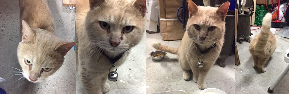 cat found LaSalle