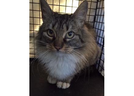 cat found in Mirabel tw