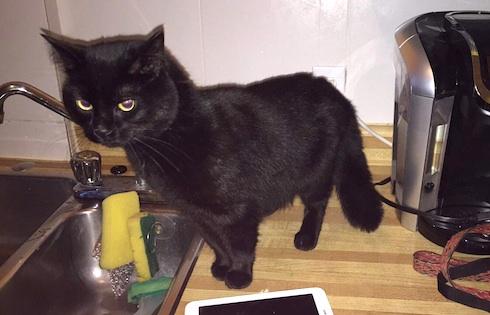 cat found in Rosemont