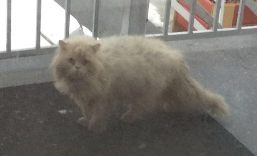cat found in Tetreaultville