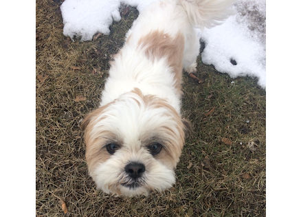 dog found in Baie d'Urfé