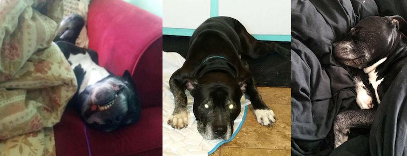 dog found in Hochelaga