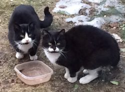 2 cats found in Fabreville