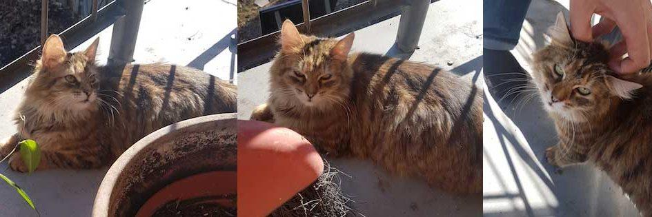 cat-found in Ahuntsic