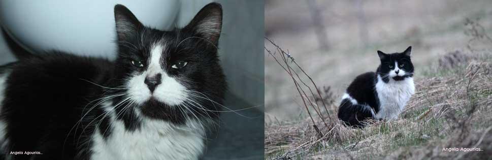 cat-found-Boucherville-bw