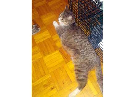 cat-found-LaSalle
