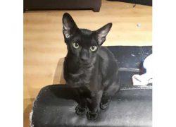 cat-found-Laval