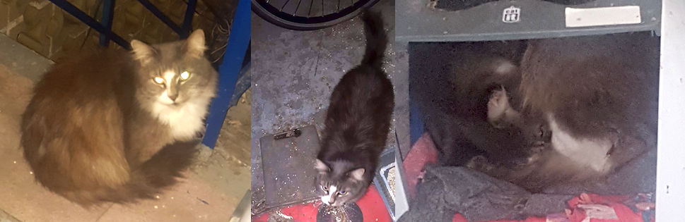 cat found in NDG