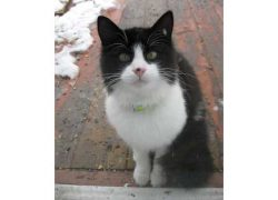 cat-found-Shefford-bw