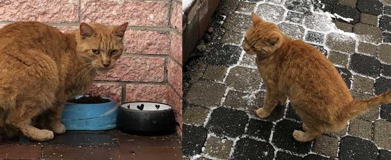 cat-found-St-Constant