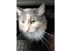cat found in St Henri