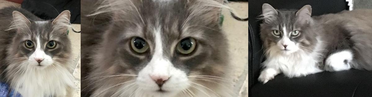 cat lost in La Prairie