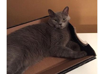 cat lost in Parc Ex