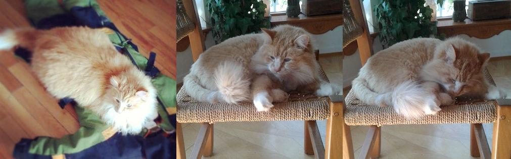 cat lost in Val David