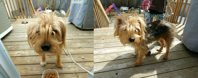 dog found in Ile Perrot