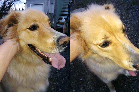 dog found in Marieville