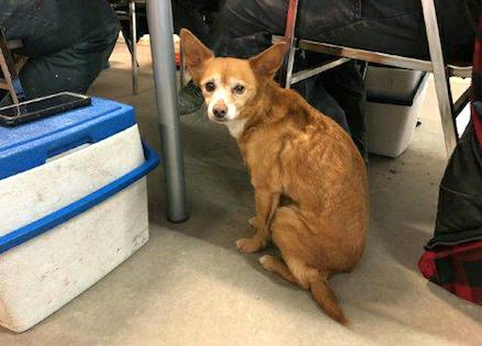 dog found in Old Montreal