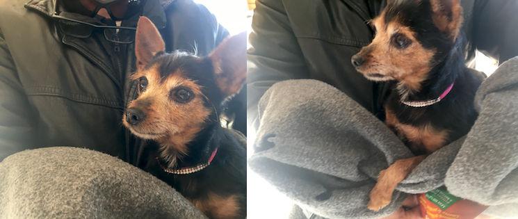 dog found in Verdun