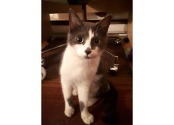 kitten found in Hochelaga