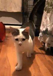 kitten-found in St-Jean-sur-Ri