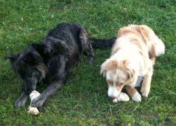 Mika et Balou