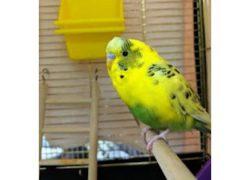 bird found Ville Marie