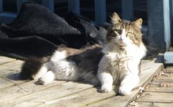 cat found Laval tw