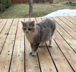 cat found PAT cali