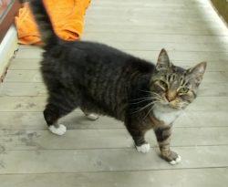 cat found PSC