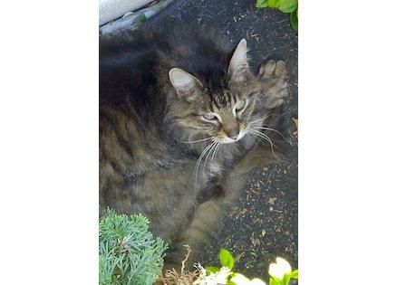cat found St Constant