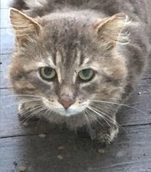 cat found in St Hubert